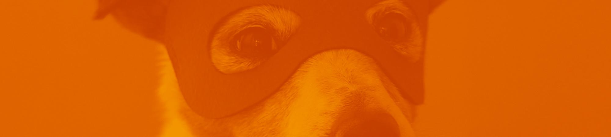 Massimiliano Morengo - pet marketing